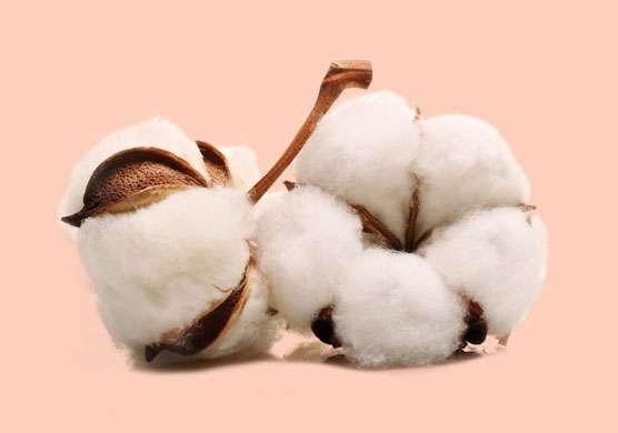 Natural and organic fabrics